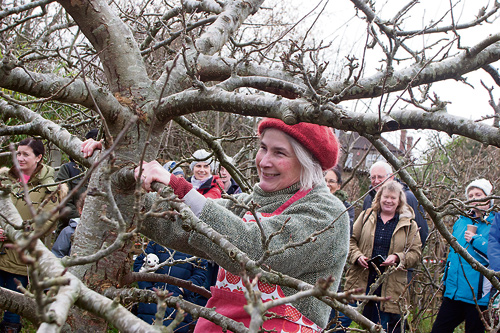 The wonders of wassailing!