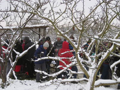 Horfield Organic Community Orchard wassail